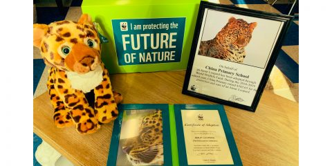 CPS Adopted an Amur Leopard